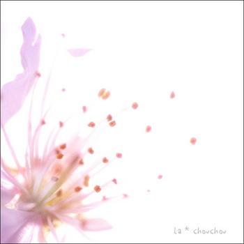 c2019-03-04.JPG